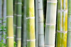 Bamboo (the.bryce) Tags: japan bamboo hiroshima shukkeiengarden