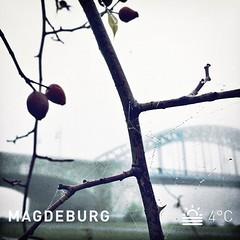 Hello foggy morning! I love this Kind of weather.  #instaweather  #weather #wx  #magdeburg #deutschland #day #autumn #clear #morning #cold #de #kiraton #fog #travel #travelblog #travelingram #traveltheworld #kiratontravel #igweather #worlderlust #wonderfu