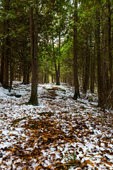 First Snow on the Bruce (Gregory Pleau) Tags: wood november autumn trees winter snow ontario canada tree forest alone quiet peace hiking bruce hike trail solo serene kemble brucetrail bthike