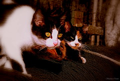 Attenti a quei Due! (Stefania.Coreno) Tags: cats cat canon chat katzen autofocus greatphotographers potd:country=it