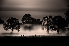 six geese (e christopher drake) Tags: blackandwhite bw green nature fog oregon portland landscape geese noir moody dream surreal lightanddark
