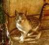 Very cute (Iqbal Osman1) Tags: life pets love kitten kitty cuteeyes