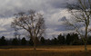 Idyllic (Sun Dogs & Daylilies) Tags: trees light lumix prime pretty cows farm farmland panasonic g5 pasture idyllic 45mm panasoniclumix almostmissedit treemendoustuesday dmcg5