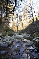 Vallee de la Hogne (7D009406) (Hetwie) Tags: nature water river landscape natuur landschap stenen rivier stroomversnellingen valleedelahogne valleivanhogne valleedelahogne valleivanhogne
