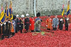 Planting the Final Poppy (McTumshie) Tags: england london unitedkingdom wwi poppies remembrance toweroflondon worldwar1 armisticeday londonist royalbritishlegion paulcummins harryhayes towerpoppies bloodsweptlandsandseasofred 11november2014