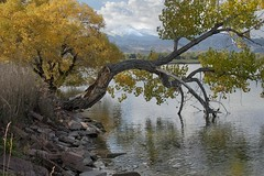 Autumn ripples (Rocky Pix) Tags: park county sky lake sports water clouds reflections river walking rockies colorado exercise loop weekend longmont g peak boulder september mount trail health shore shade cottonwood grasses meeker nikkor michel pastoral dawson f28 vr mcintosh monopod telezoom longs stvrain riprap basinrockypixrockymountainpixw mcintoshlakepark kiteleyf161100thsec70mm70200mm autumnripples