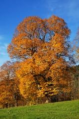 Über Herbstwiesen geht es nach Lenggries hinein