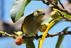 Natureza bucólica (Claudio Arriens) Tags: bird brasil cores natureza portoalegre pássaro ave riograndedosul birdwatcher bucolismo canonef1740mmf4l canoneos40d