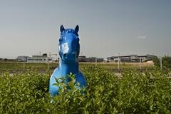BLUE HORSE (Roberto Deri) Tags: blue sky horse cloud green statue streetphotography roberto deri