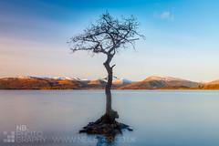 Milarrochy Bay tree (GenerationX) Tags: longexposure blue trees sky white mountains water clouds reflections bay scotland still rocks unitedkingdom roots neil calm loch lomond trossachs barr millarochy milarrochy