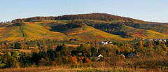 Rolling Hills - Landscape in Autumn (Batikart) Tags: nature landscape plants vineyards vines wine grapes wein weinberg hill mountains trees forest grape fields felder strase road path way blätter leaf leaves foliage greenery patterns patchwork stripes lines curve quilt colors multicolored colurfol indiansummer herbst herbstfärbung birdseyeperspective vogelperspektive aerialview stitch green yellow red orange variation growth tranquility autumn fall seasons strümpfelbach weinstadt badenwürttemberg deutschland germany europa europe 2014 geotagged canon g11 powershot batikart ursula sander house village town 100faves 200faves 300faves 400faves