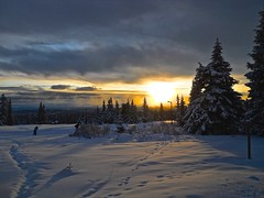 Afternoon skiing - Sjusjen, Norway (malinybi) Tags: winter sunset snow ski nature norway skiing fir pinetrees crosscountryskiing skiers sjusjen staves afternoonsunset trolled nyhus printsinthesnow maylisbirchall malinybi christmastreesinnature birkebeinerlp
