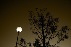 Interlude I (shumpei_sano_exp3) Tags: light sunset bw tree lamp monochrome sepia canon eos orlando italia tramonto streetlamp bn 5d canon5d albero luce lecce lampione seppia mybook 32mm cfp canoneos5d monocromatico eos5d canonef24105f4lisusm ecotekne jjjohn70 jjjohn ~jjjohn~ giovanniorlando circolofotograficopaullese wwwgiovanniorlandoit