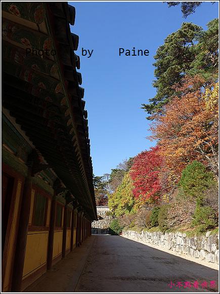 慶州佛國寺 (13).JPG