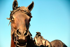 Horse (EmperorNorton47) Tags: autumn arizona fall statue bronze digital photo afternoon sedona publicart