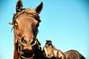 Horse (EmperorNorton47) Tags: autumn arizona fall statue bronze digital photo afternoon sedona publicart