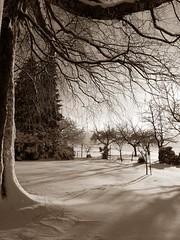 Winter Wonderland III sepia (christiane.grosskopf) Tags: schnee winter snow home sepia germany landscape deutschland birch schwarzwald blackforest winterwonderland birke winterlandschaft winterwunderland samsunggalaxys4