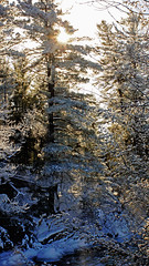 ice and trees (Wil James) Tags: trees winter snow water zeiss freezing falls elliot ontarion sonya77