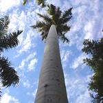 "palmboom_tot_in_de_hemel <a style=""margin-left:10px; font-size:0.8em;"" href=""http://www.flickr.com/photos/117161355@N07/16220572771/"" target=""_blank"">@flickr</a>"