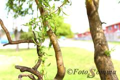 Arbol (rpedreros) Tags: naturaleza hojas arbol tronco rama
