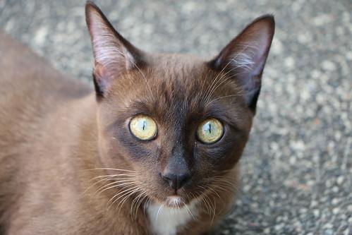 Hua Hin Cat05