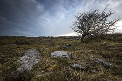 Windblown (Mark McGranaghan) Tags: ireland wild tree landscapes theburren coclare