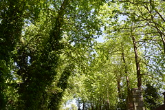 DSC_1144 (marirenaa) Tags: road trees plants plant tree green nature forest landscape outdoors village outdoor greece volos