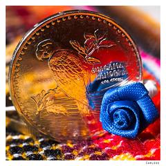 Smaller Than A Coin (Carlos E Corts Parra) Tags: macro rose coin macromondays smallerthanacoin