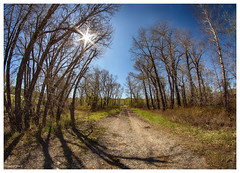 shadow road (Dax Ward Photography) Tags: road trees shadow wild sun nature forest montana sunny haunted sunburst dirtroad ghostly treeshadow shadowy