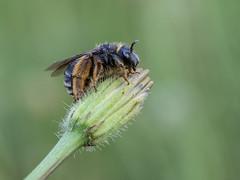 _5225131-1 (Masaco76) Tags: flowers macro bug flor insecto macronature macromondays macrodreams