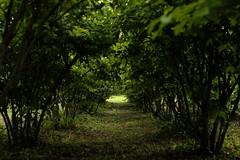 green tunnel/ (kurupa_m) Tags: summer plant tree green   xt10