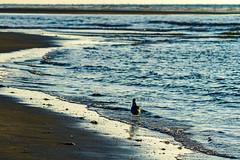 more Juist (rgloeckner) Tags: northsea ostfriesland juist