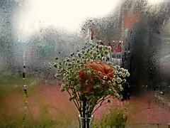 DSCN5588 Flores de invierno (Aprehendiz-Ana La) Tags: city winter orange flores flower color luz argentina ventana lluvia nikon flickr rosa invierno bouquet ramo fro fotografa bruma gara analialarroud