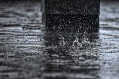 Big Drops (Mister Day) Tags: rain puddle droplets drops edmonton splash pouring downpour