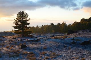 Gold silence - Etna Natural Park