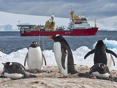 HMS PROTECTOR visits Port Lockroy,Antarctica (Royal Navy Media Archive) Tags: snow ice antarctica excellent protector peopleatwork antarcticocean surfaceship laphotjayallen antarcticpatrolship
