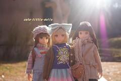 cute rurukos❤ (cute-little-dolls) Tags: park cute sunshine japan outside doll petworks 14ss ruruko ccsgirl 14ny 14aw