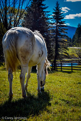 (CoreyJennings) Tags: new york sky horse lake ny clouds barn nikon shadows farm equestrian grazing