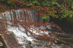 CRUMLIN GLEN AND WATERFALL (Monkiiiey Henry Clark) Tags: waterfall glen and crumlin