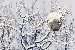 Winter Wasps (Simon Laroche_8) Tags: christmas trees winter sleeping urban snow canada streets simon ice night canon season wonder moments photographie montral quebec bokeh snowy montreal perspective falling dreamy icy flakes blizzard vanishing urbanscape vanish freelancer laroche winterish canon5dmarkiii