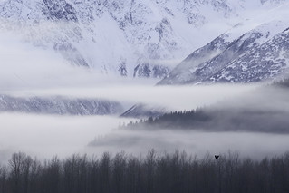 Eagle, Mist Layers, and Mountains