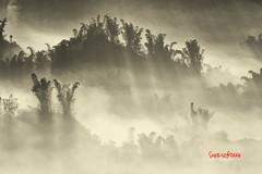 Misty Erliao (風傳影像 SUNRISE@DAWN photography) Tags: light mist taiwan bamboo beam valley tainan 台灣 台南 sunbeam sunray lightray 日出 竹子 山谷 二寮 erliao 斜射光 霧氣
