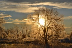 December 28, 2014 - Amazing sunrise as seen from the Rocky Mountain Arsenal. (Ed Dalton)