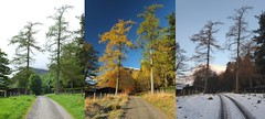 The colourful road to Acharn Farm (stuant63) Tags: autumn winter summer snow ice scotland frozen seasons angus farm glen freeze larch clova cairngormsnationalpark glendoll acharn stuant63 stuartanthony