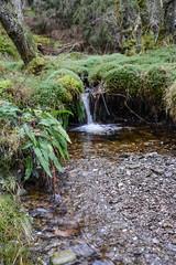 DSC_7358 (Bobfantastic) Tags: park christmas uk winter water scotland nikon stream newyear burn national trossachs d600 lochachray