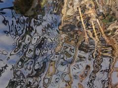 P1020594 (nili tochner) Tags: nature objects manipulatedphotography