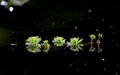 Morning dew - On Explore 16 Jan 2015 (kyuen13) Tags: