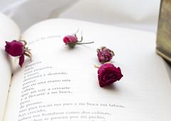 En ti la tierra - Poema de 'Los Versos del Capitán' - Pablo Neruda (Micheo) Tags: pabloneruda poema poem poesía poetry text texto libro book literatura literature ternura amor love rosa rose beauty poeta