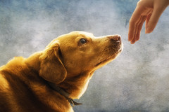 Making of dog (Ana Todor) Tags: dog god genesis michelangelo renaissance