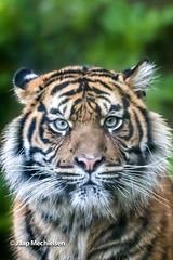 JM-11.jpg (Jaap Mechielsen) Tags: arnhem nederland burgerszoo dierentuin gelderland